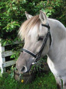Sponsor a Horse (Gigi)